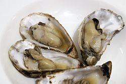 Sautierte Austern